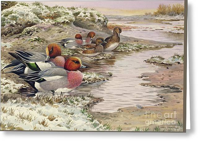 Daybreak On The Washes  Wigeon Greeting Card by Carl Donner