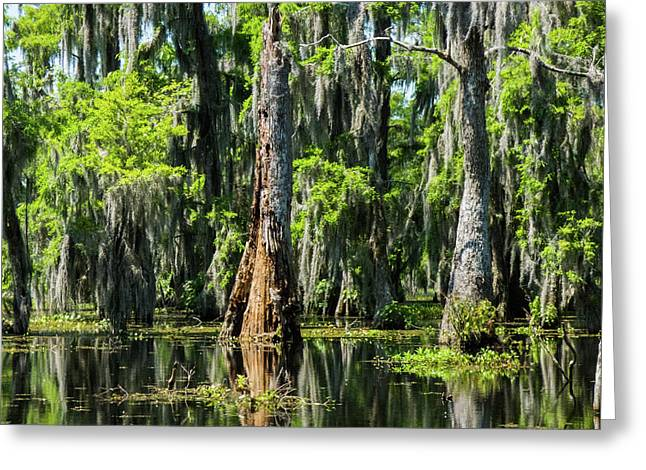 Daylight Swampmares Greeting Card