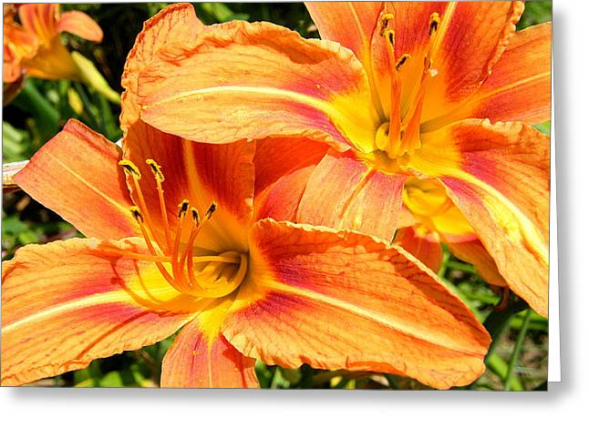 Daylillies In Bloom Greeting Card by Margaret G Calenda