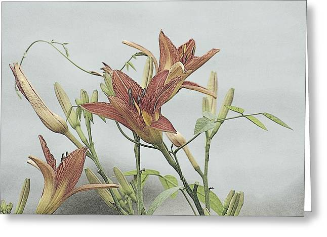 Daylilly Dreaming Greeting Card