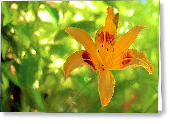 Daylily Greeting Card by Charles Ables