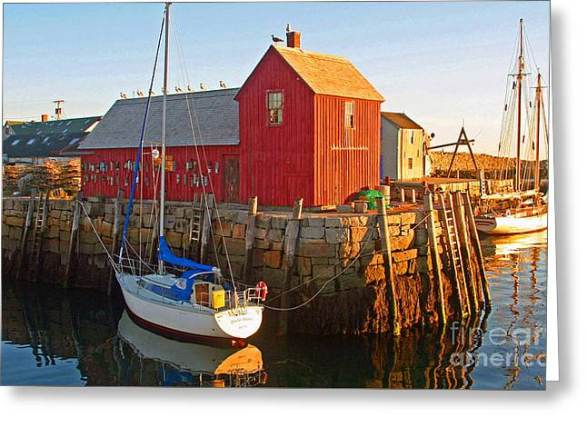 Daysailer At Rockport Massachusetts Greeting Card by Steve  Gass