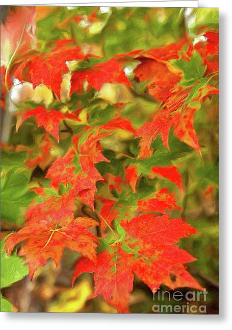 Greeting Card featuring the painting Dazzling Autumn Leaves In The Blue Ridge Ap by Dan Carmichael