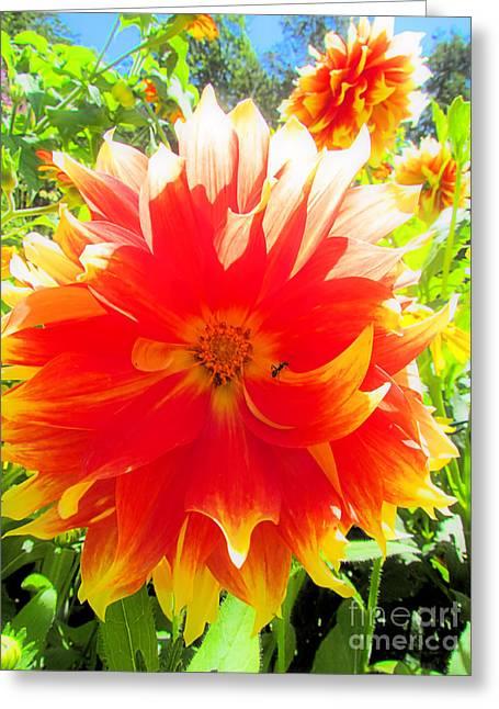 Dazzling Dahlia Greeting Card