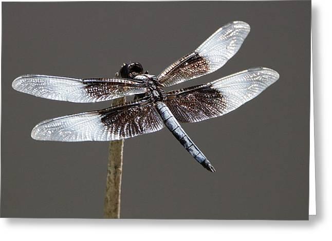 Dazzling Dragonfly Greeting Card