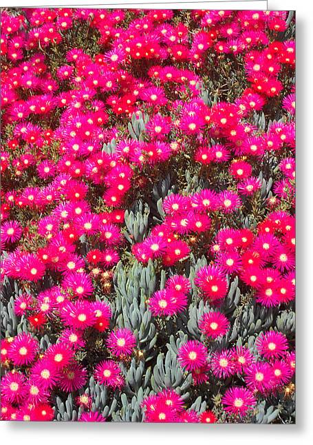 Dazzling Pink Flowers Greeting Card