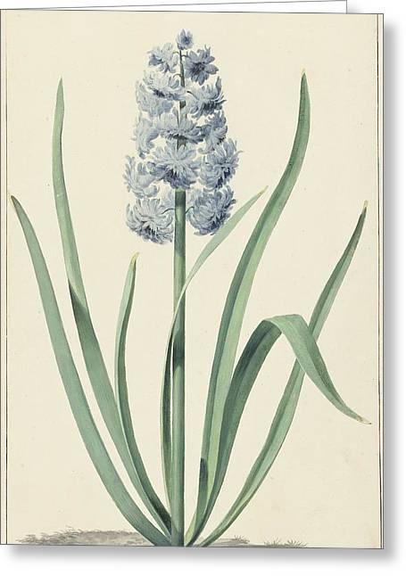 De Blauwe Hyacint Franciscus Greeting Card
