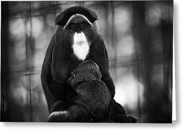 De Brazza's Monkey Greeting Card