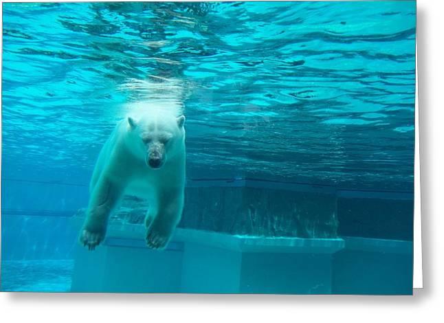 Dead Bear Float Greeting Card