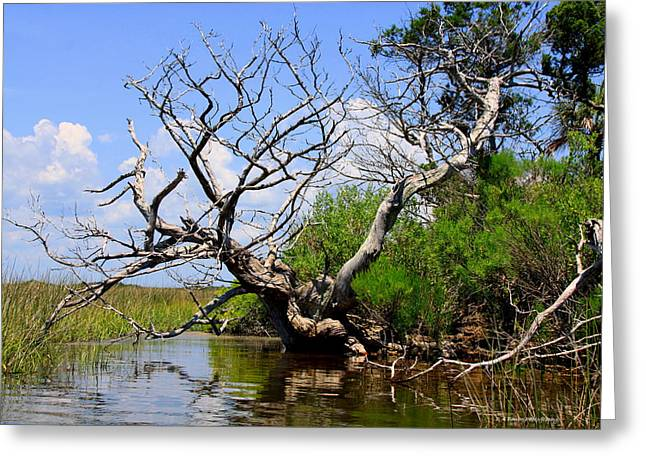 Greeting Card featuring the photograph Dead Cedar Tree In Waccasassa Preserve by Barbara Bowen