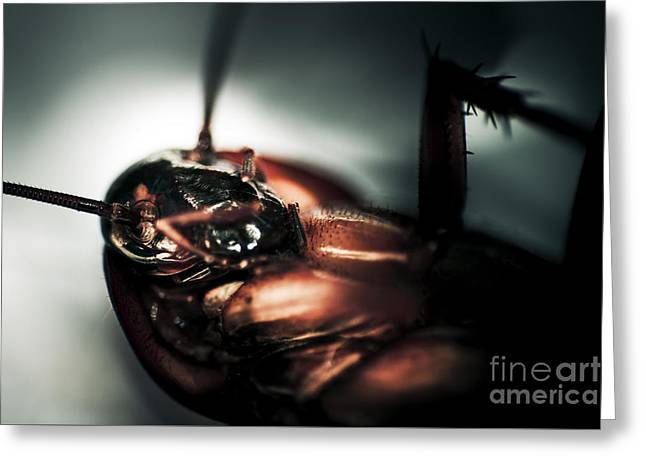 Dead Cockroach Greeting Card by Jorgo Photography - Wall Art Gallery