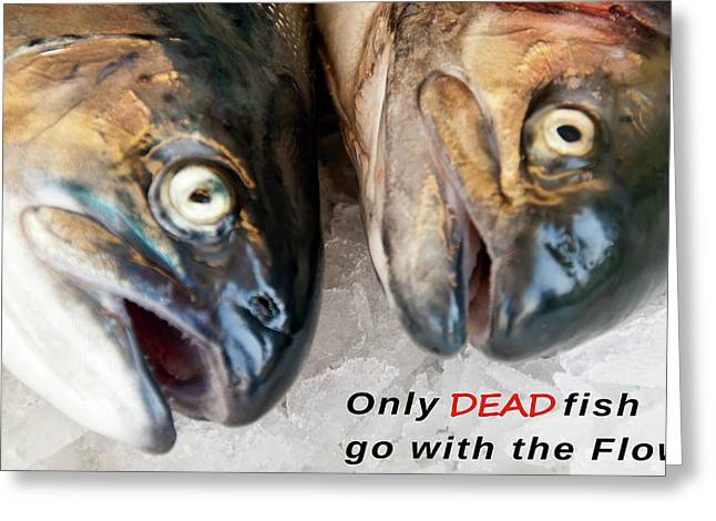 Dead Fish .... Go With The Flow Greeting Card by Daniel Hagerman