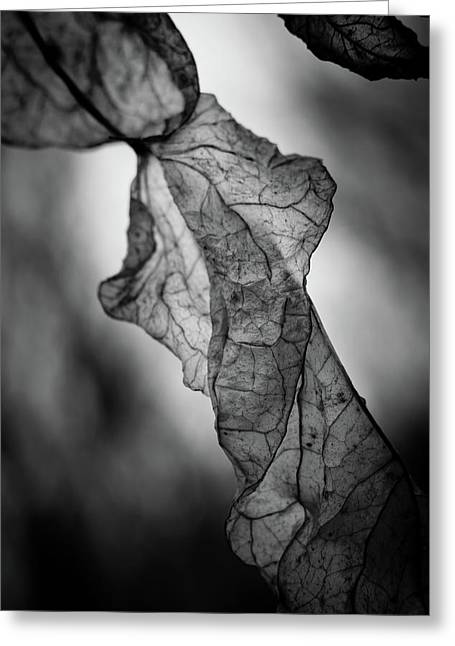 Fragile Leaf Bw Greeting Card