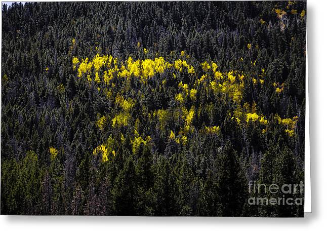 Yellow Fire Greeting Card by Jon Burch Photography