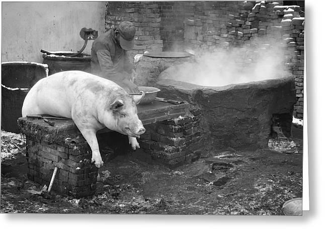 Dead Pig Greeting Card by Jean De la Barriere