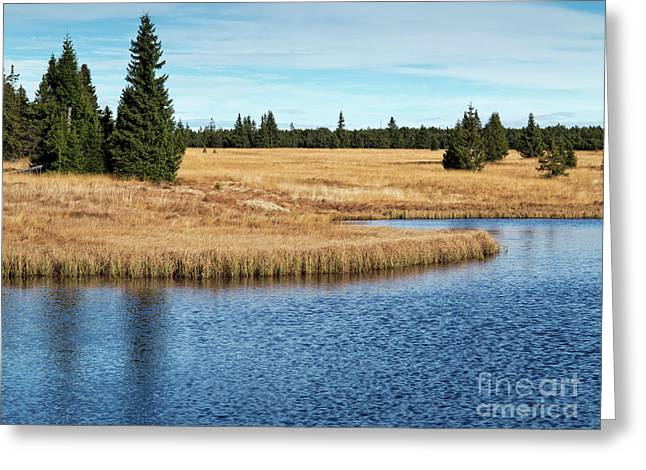Dead Pond In Ore Mountains Greeting Card by Michal Boubin