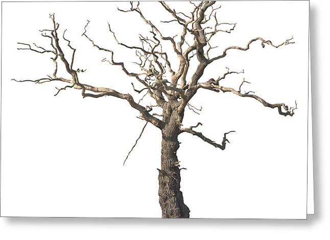 Dead Tree Greeting Card by Amanda Elwell