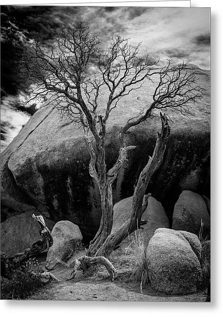 Dead Tree And Boulder At Joshua Tree Greeting Card