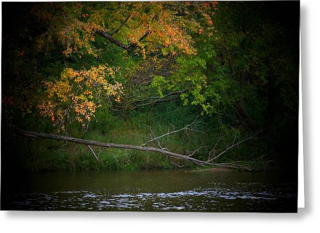 Dead Tree And Leaves Greeting Card by Michael L Kimble