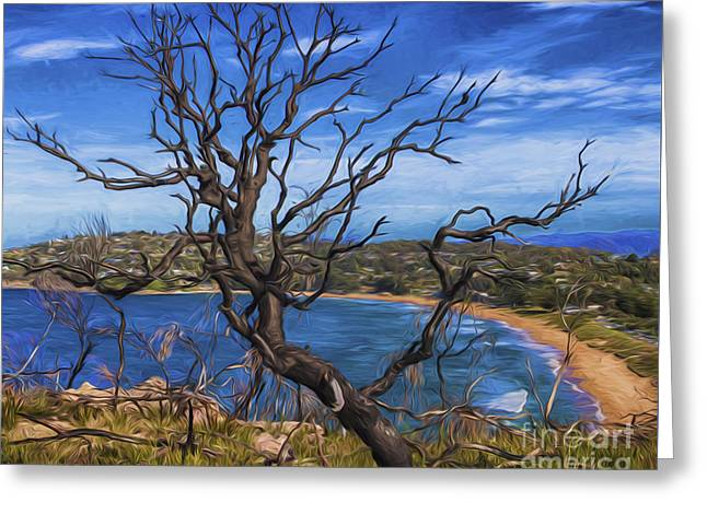 Dead Tree At Barrenjoey Headland Greeting Card by Avalon Fine Art Photography