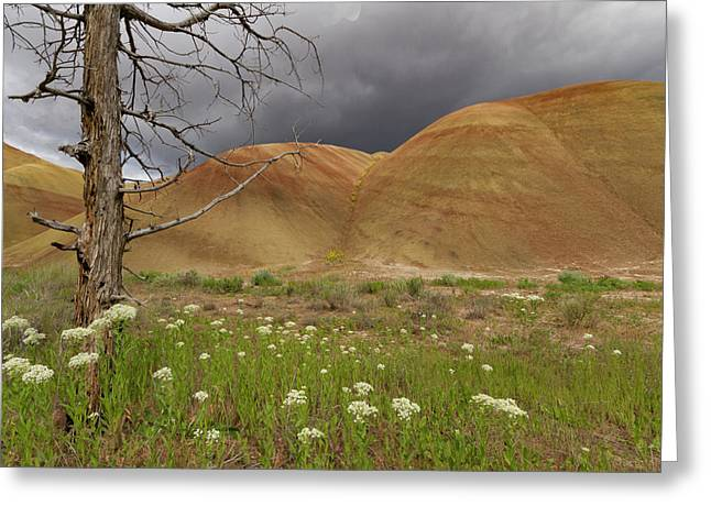 Dead Tree At Painted Hills Greeting Card by Jean Noren
