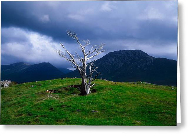Mountaintop. Trees Greeting Cards - Dead Tree, Connemara, Co Galway, Ireland Greeting Card by The Irish Image Collection