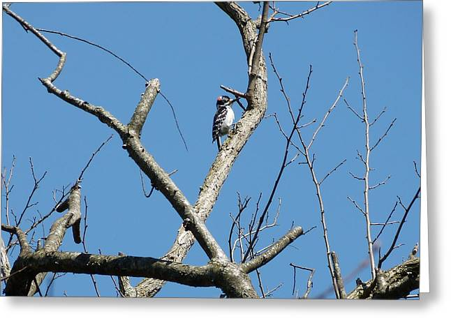 Dead Tree - Wildlife Greeting Card by Donald C Morgan