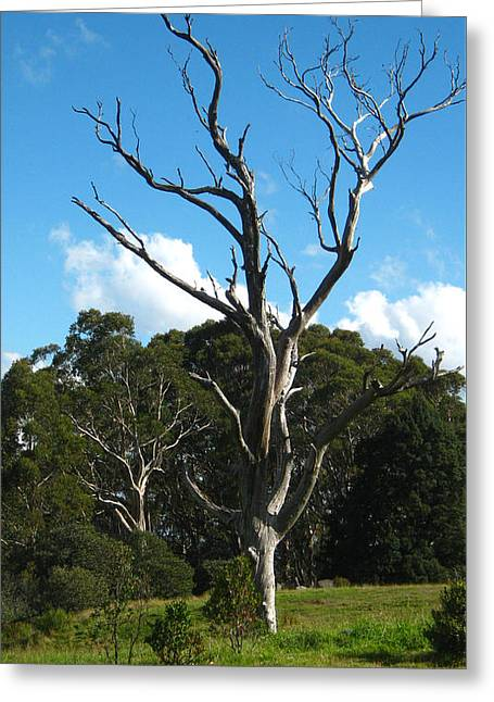 Dead Tree Greeting Card by Emma Frost