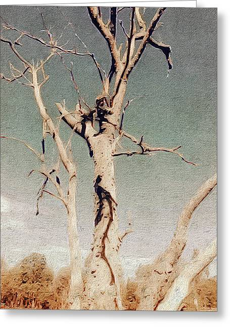 Dead Tree, Outback. Greeting Card