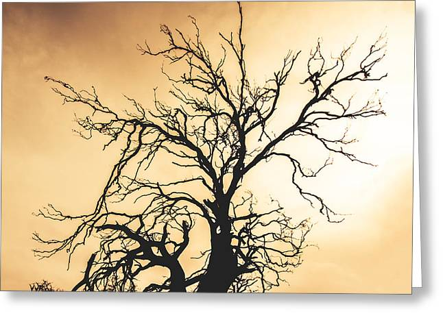 Dead Tree Silhouette Greeting Card by Jorgo Photography - Wall Art Gallery
