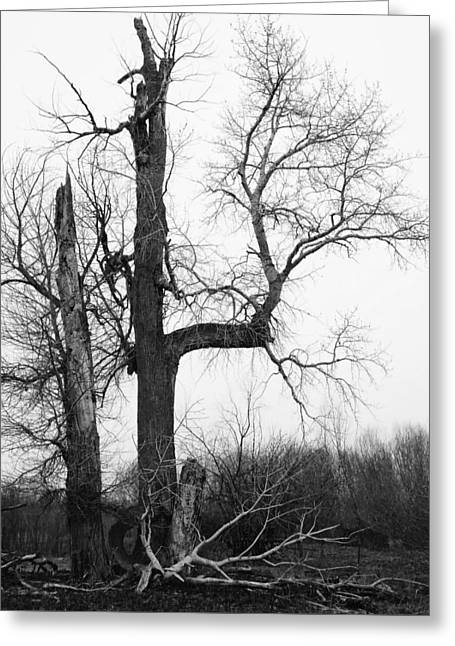Dead Tree Ten Mile Creek Greeting Card