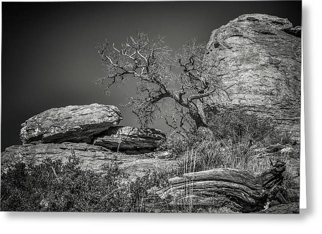 Dead Tree With Boulders Greeting Card by Joseph Smith