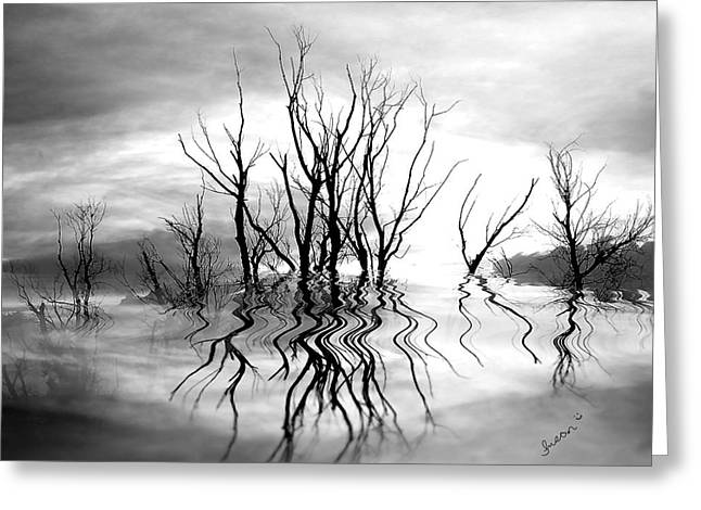 Greeting Card featuring the photograph Dead Trees Bw by Susan Kinney