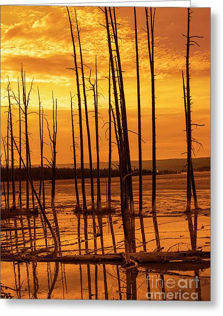 Dead Trees Greeting Card