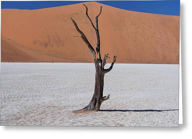 Dead Vlei Solo Greeting Card