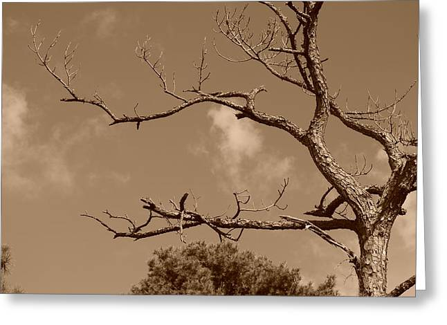Greeting Card featuring the photograph Dead Wood by Rob Hans