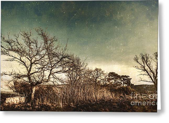 Dead Woodland Greeting Card by Jorgo Photography - Wall Art Gallery