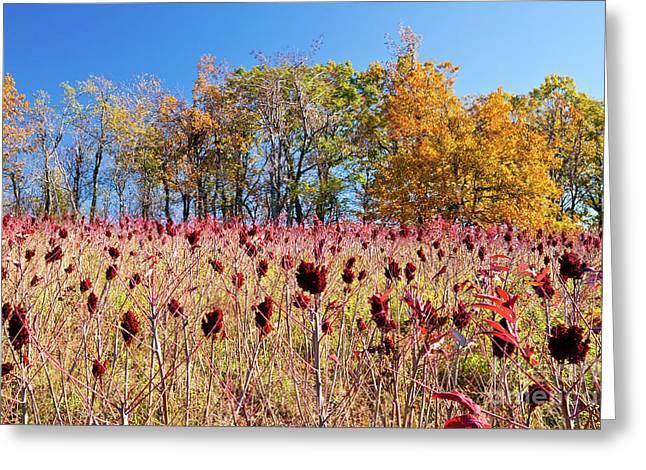 Deadly Beauty In The Blue Ridge Greeting Card by Dan Carmichael