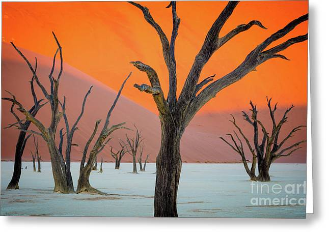 Deadvlei Lines Greeting Card by Inge Johnsson