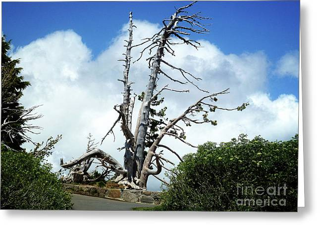 Death Of A Tree Greeting Card by Methune Hively