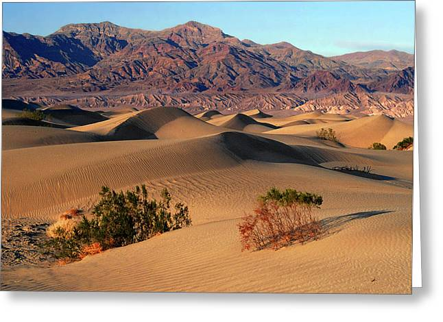 Death Valley Dunes Greeting Card by Tom Kidd