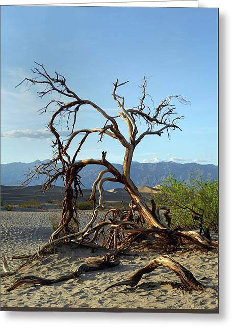 Death Valley Landscape Greeting Card by Gordon Beck