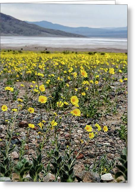 Death Valley Super Bloom Greeting Card