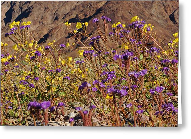 Death Valley Superbloom 401 Greeting Card by Daniel Woodrum