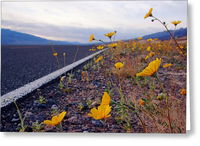 Death Valley Superbloom 500 Greeting Card by Daniel Woodrum