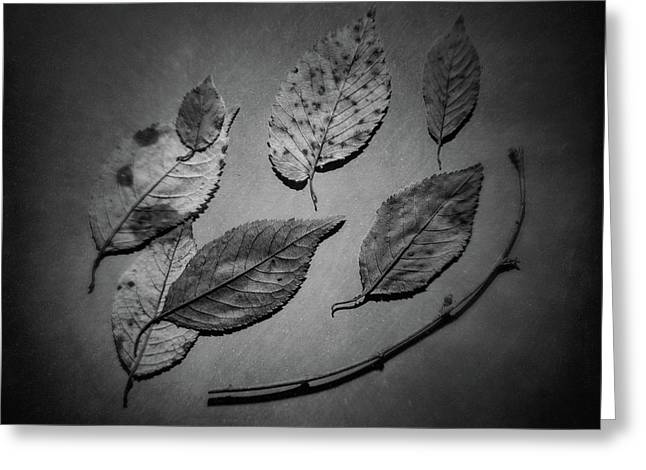 Decaying Leaves Greeting Card