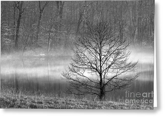 December Mist - D009785-bw Greeting Card by Daniel Dempster