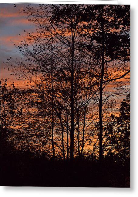 December Sunset In Frog Pond Woods Greeting Card by Maria Suhr