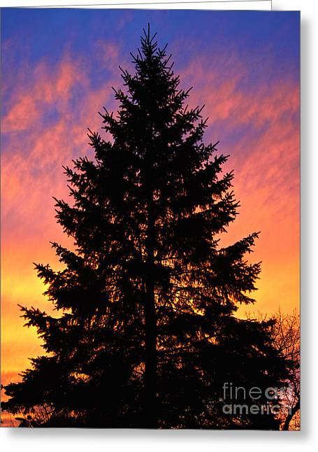 December Sunset Greeting Card by Mark Miller