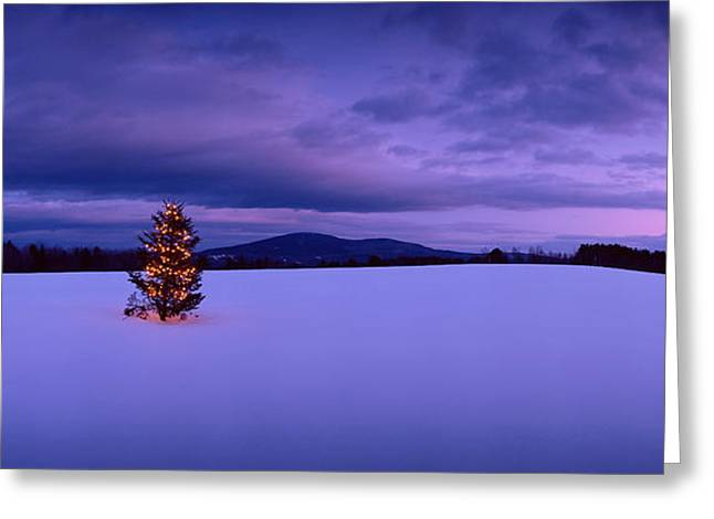 Decorated Christmas Tree In A Snow Greeting Card by Panoramic Images